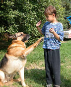 <strong>Boy training his German shepherd dog wave using clicker training</strong>