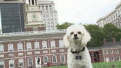 <strong>Bella served at Independence Hall</strong>