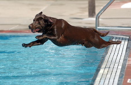 Splish Spash Tips For Taking Your Dog Swimming This Summer K9 Carfence
