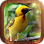Nature in Photos, a New iPad Game, is Released by AdoreStudio Ltd