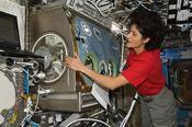 <strong>Expedition 32 Flight Engineer Sunita Williams works at the Microgravity Science Glovebox in the Destiny laboratory of the International Space Station, August 2012. (NASA)</strong>