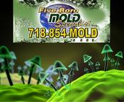 NYC Mold Inspection Services for Hurricane Sandy