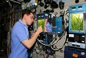 During Expedition 29 in 2011, Russian cosmonaut Sergei Volkov checks the progress of new growth in the Rastenia investigation aboard the International Space Station. (NASA)