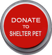 <strong>Donate to shelter pet. Make homeless pet's life better.</strong>