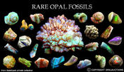 <strong>Rare Opal Fossils</strong>