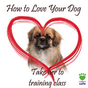 <strong>Take your dog to a training class that uses positive reinforcement</strong>