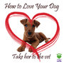 How to Love Your Dog for Valentine's Day - The Truth Will Surprise You!