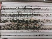 <strong>Toxic mold can grow hidden inside HVAC air handlers and air ducts and visibly on duct registers.</strong>