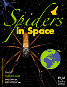 <strong>The &quot;Spiders in Space&quot; teacher's guide is available for free download at bioedonline.org.