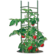 <strong>The Gardener's Blue Ribbon Ultomato Plant Cage gives great support to growing tomato plants, helping air and light to penetrate the plants.</strong>