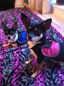 <strong>Charlie and Ivy wearing the brand new Doodie Pack Mini!</strong>