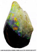 <strong>Rare black opal shell not for sale</strong>