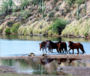 New Book Celebrates Arizona's Famous Salt River Wild Horses