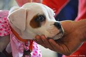 <strong>Atlanta Boxer Rescue provides adoption and fostering opportunities.</strong>