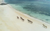<strong>Guests can restore and revive their spirit with horseback riding on the beach</strong>