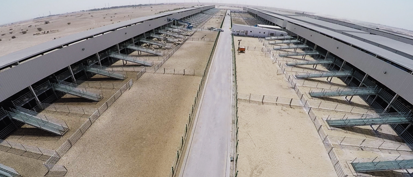 Moutaz Al Khayyat States: Why Qatar is Raising Cows in the Desert?