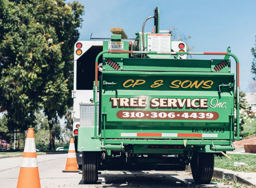 Tree Trimming Los Angeles Company, CP & Sons Tree Service, Offers Top-rated Services