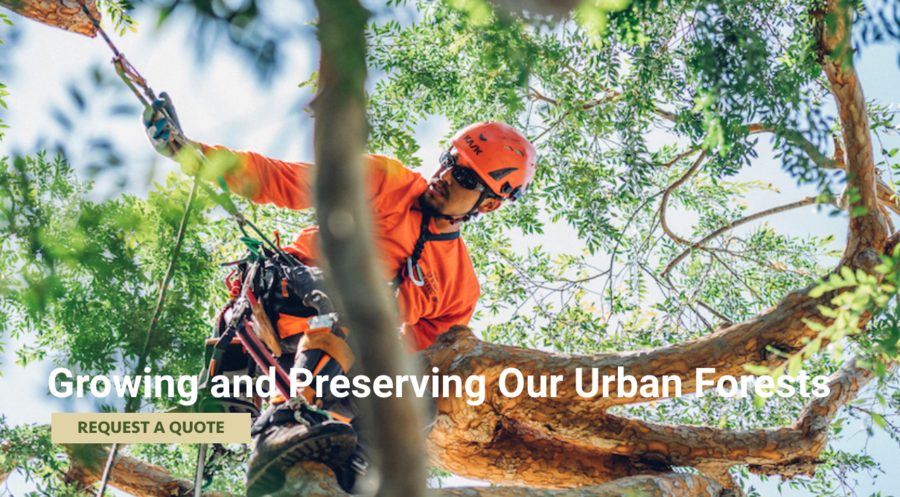 Tree Trimming Los Angeles Experts, CP & Sons Tree Service, Are Known For Their Expertise In The Tree Care Industry