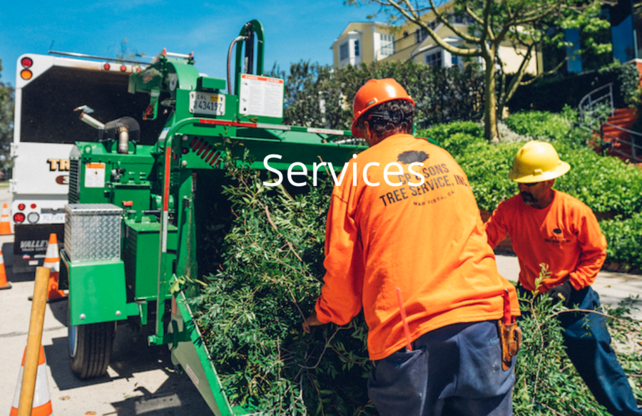 Tree Trimming Los Angeles Experts At CP & Sons Tree Service Are Known For Improving Trees' Health