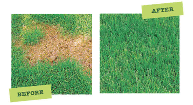 Finally – A Way To Make Nasty Dog Pee Spots in Your Lawn Go Away