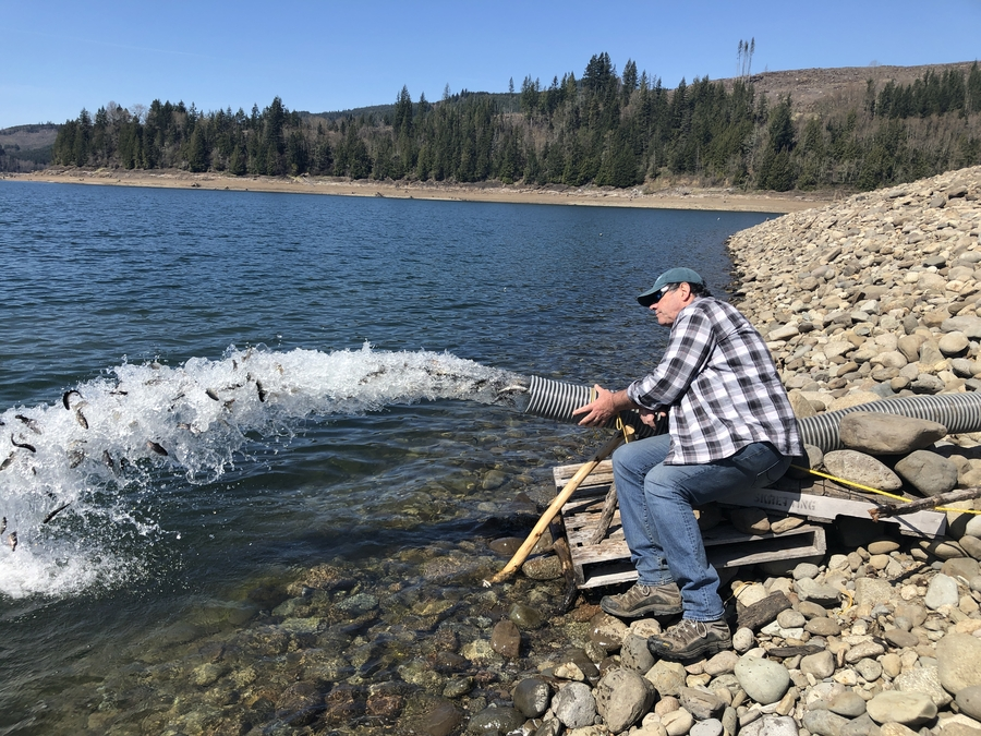 Northwest Fisheries Enhancement Helps Save over 400,000 Rainbow Trout During COVID-19