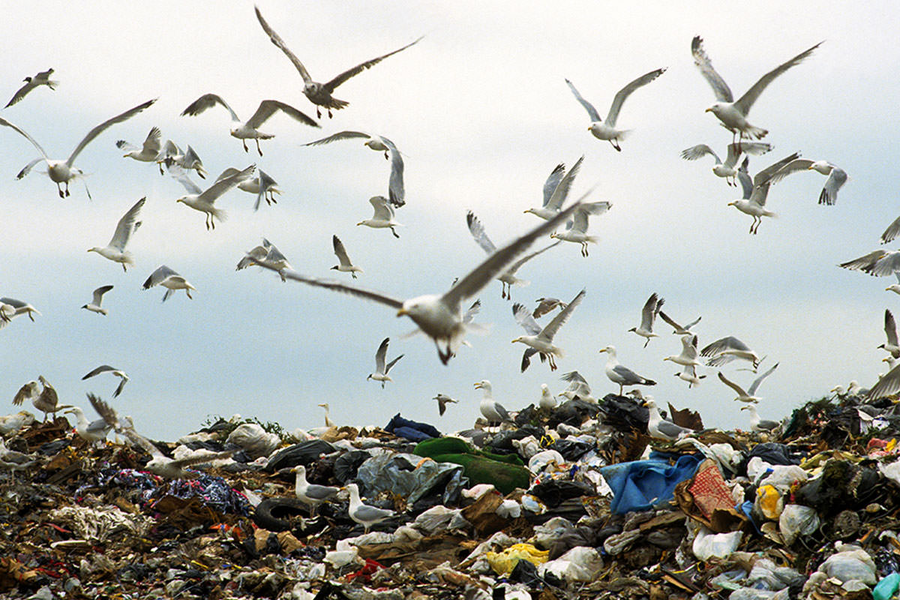 Bel Trading & Consulting Ltd Scares Birds Away from Landfills, Protecting Us from Infections