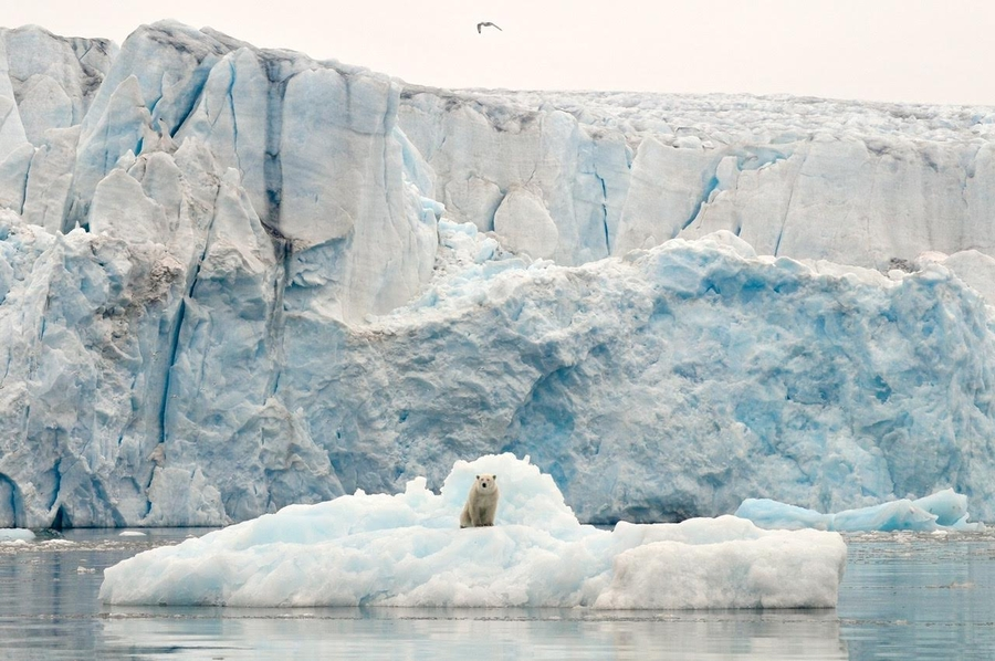 Nansen Polar Expeditions Bridging The Gap Between Film Production And Yacht Expeditions