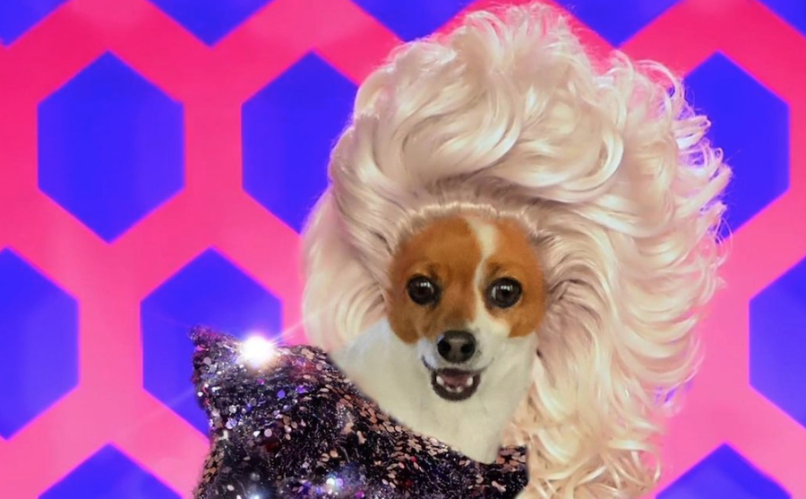 RuPawl Doggie Drag Queen Nominated for Coveted Webby Award