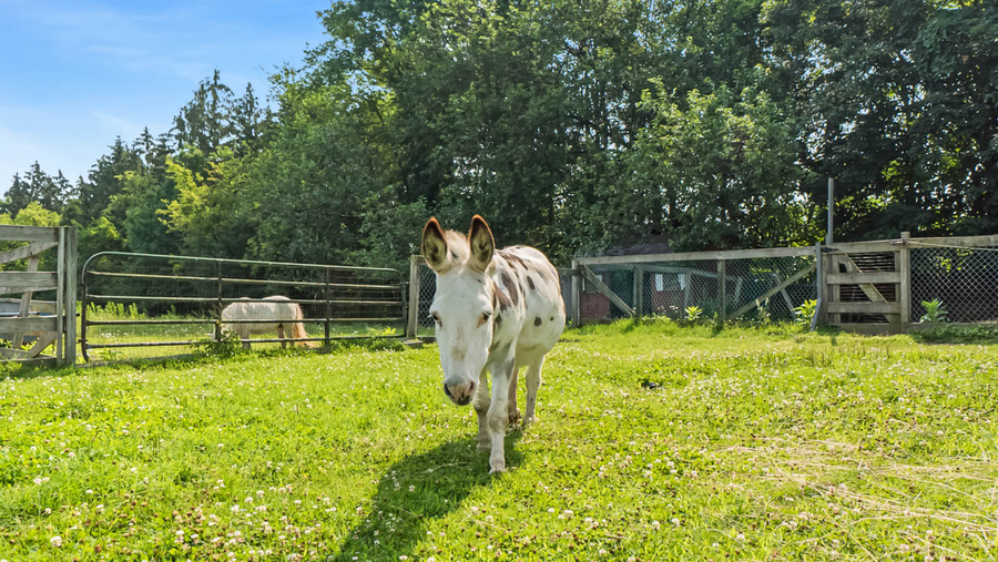 Noah's Park, An Animal Sanctuary in Orange County, NY, Offered For Sale
