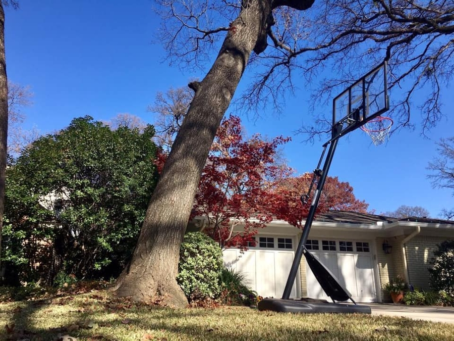 Some Signs That Your Tree Needs To Be Removed