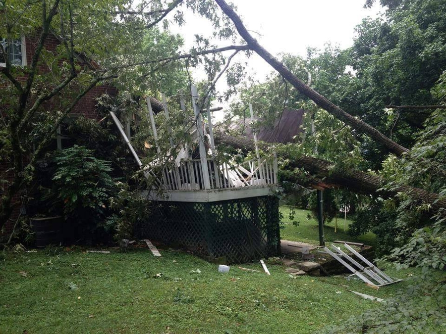 Some Signs That Indicate Your Tree May Fall